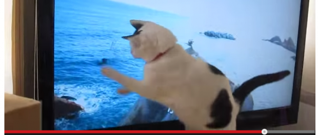 【悲報】あまちゃんのオープニングに反応する猫動画 88万回再生で大人気なのに音が消されて激おこぷんぷん丸
