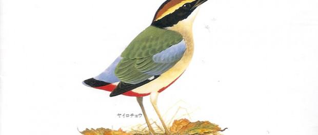 「日本の野鳥大全集」をiTunesで取り込んだ結果wwwwwwwwwww(画像あり)
