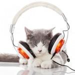 洋楽って英語のリスニング向上に役立つかな?