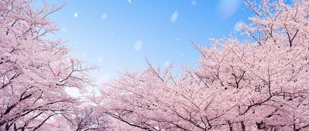 日本の桜ソング歴代売上トップ10がこちらになります