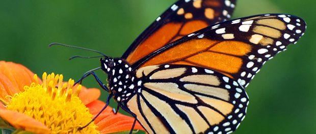 会社の飲み会でのカラオケで「butterfly」ってあり?
