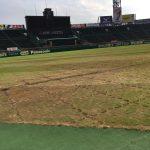 【朗報】甲子園の芝ボロボロ問題、水樹奈々は悪くないことが判明