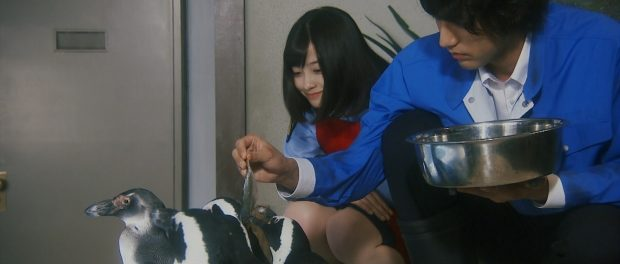 【悲報】ハシカンが可愛いだけのドラマ「警視庁いきもの係」第2話視聴率爆下げwwww