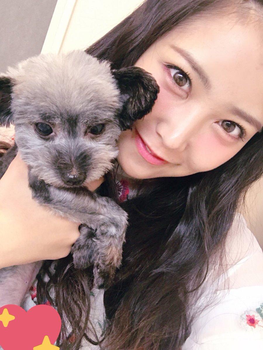 白間美瑠 犬