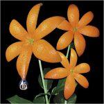 オレンジレンジの花が100万枚売れた時代wwwwww