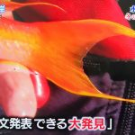 【またか】TOKIOさん、論文発表レベルの貴重な魚を発見をしてしまう