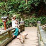 【悲報】浜崎あゆみさん、犬の散歩をしただけで大炎上してしまう