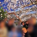 安倍昭恵さん、手越祐也らと「桜を見る会」やっていた